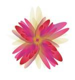 Les fleurs se sont levées Image stock