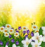 Les fleurs sensibles de ressort de branche Photographie stock libre de droits