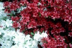 Les fleurs signifient que le ressort est ici photographie stock libre de droits