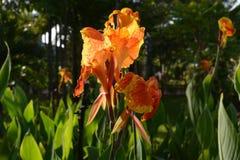 Les fleurs sont comme le bel amour Image stock