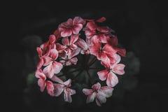 Les fleurs sont notre vie image libre de droits