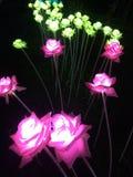 Les fleurs sont sans lumière Photographie stock libre de droits
