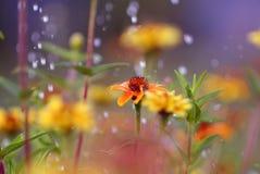 Les fleurs sous la pluie Photo libre de droits