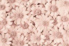 Les fleurs soustraient des tons de sépia de style sur les murs, concept de construction de papier peint Photos stock