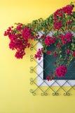 Les fleurs sur la fenêtre Image libre de droits