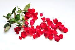 Les fleurs tombent dans les parties Image stock