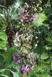Les fleurs tropicales lèvent le tronc d'arbre Image libre de droits