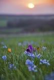 Les fleurs voient outre du soleil Photographie stock