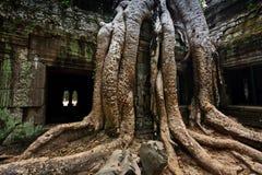 Les fonds d'arbre enveloppent le temple Angkor de Ta Prohm Image stock
