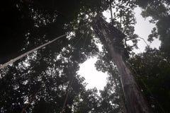 Les forêts Photos stock