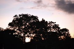 Les forêts Photo stock