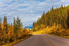 Les forêts coniféres multicolores photo libre de droits