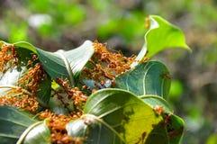 Les fourmis accumulent leur maison Image libre de droits