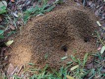 Les fourmis noires aident la terre pour creuser le sol Photographie stock libre de droits