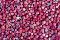 Les fraises fraîches, mûres, juteuses tournent, baie sauvage Fraises rouges fond, vue supérieure Images stock