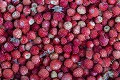 Les fraises fraîches, mûres, juteuses tournent, baie sauvage Fraises rouges fond, vue supérieure Photo stock