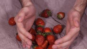 Les fraises fraîches, mûres, juteuses tournent Rotation dans le sens des aiguilles d'une montre HD de fraises rouges clips vidéos