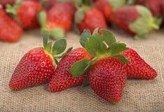 Les fraises mûres rouges fraîches ont arrangé sur le sac à jute Photographie stock