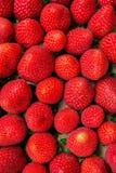 Les fraises organiques mûres d'été de modèle de nourriture dans la boîte en carton au ` s d'agriculteur lancent des couleurs sur  Photographie stock