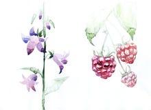 Les framboises portent des fruits, waterco graphique d'icône de fleurs de cloche de feuilles Photos stock