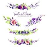 Les frontières d'aquarelle ont placé avec des fleurs, des figues et des baies Illustration tirée par la main originale aux nuance illustration stock