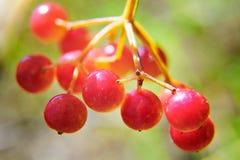 Les fruits clair comme de l'eau de roche Photos libres de droits