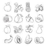 Les fruits de griffonnage de dessin de main dirigent l'illustration pour l'emballage de fruit illustration libre de droits