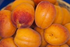 Les fruits des abricots de l'Italie dactylographient le rouge orange cultivés dans Metaponto (mA Images stock
