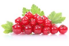 Les fruits frais de baies de groseilles de groseille rouge portent des fruits d'isolement sur le petit morceau Photographie stock