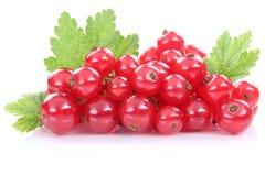 Les fruits frais de baies de groseilles de groseille rouge portent des fruits sur le petit morceau Photo stock