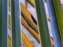 Les géométries de palmettes Photos stock