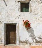 Géraniums Photographie stock libre de droits