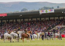 Les gagnants défilent pour des chevaux au Salon Agricole Royal du Pays de Galles photos libres de droits