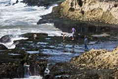 Les garçons risquent leurs vies rassemblant des bernaches d'une étagère de roche de mer outre d'Essaouira au Maroc photographie stock