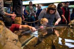 Les gens à l'aquarium photographie stock