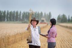 Les gens à la récolte Photos libres de droits
