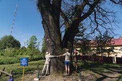 Les gens étreignent le chêne dans la ville de Chernivtsi, Ukraine photos libres de droits
