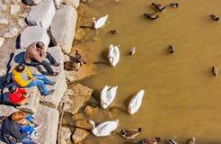 Les gens alimentant les oiseaux aquatiques Images libres de droits