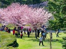 Les gens apprécient les fleurs de cerisier de ressort au ` s, haut parc de Toronto Photographie stock libre de droits