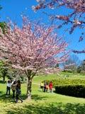 Les gens apprécient les fleurs de cerisier de ressort au ` s, haut parc de Toronto Images stock