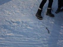 Les gens apprécient le tour de traîneau sur la neige dans le Central Park banque de vidéos