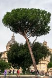 Les gens, les arbres et les bâtiments d'architecture romaine à Rome, Italie image libre de droits