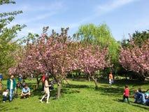 Les gens ayant l'amusement dans le jardin japonais du parc public de Herastrau Photographie stock libre de droits