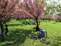 Les gens ayant l'amusement dans le jardin japonais du parc public de Herastrau Images stock