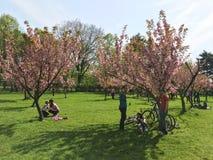 Les gens ayant l'amusement dans le jardin japonais du parc public de Herastrau Photo libre de droits