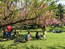 Les gens ayant l'amusement dans le jardin japonais du parc public de Herastrau Photos libres de droits