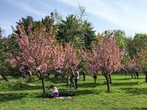 Les gens ayant l'amusement dans le jardin japonais du parc public de Herastrau Image stock
