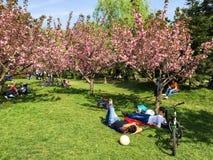 Les gens ayant l'amusement dans le jardin japonais du parc public de Herastrau Photographie stock