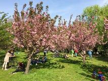 Les gens ayant l'amusement dans le jardin japonais du parc public de Herastrau Photos stock