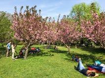 Les gens ayant l'amusement dans le jardin japonais du parc public de Herastrau Images libres de droits
